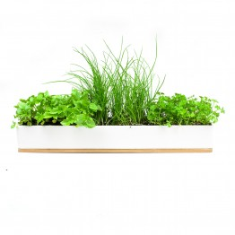 Urban Greens Windowsill Grow Kit - Micro Herbs